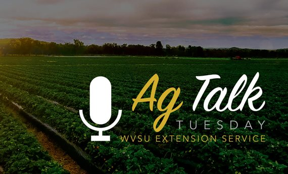 Mushroom Production the Topic of Next West Virginia State University Ag Talk Tuesday Session August 11